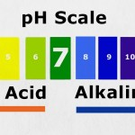 Understanding Acid & Alkaline Balance In The Body