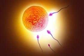 fertility-280x186